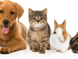 Pet - Piccoli Animali